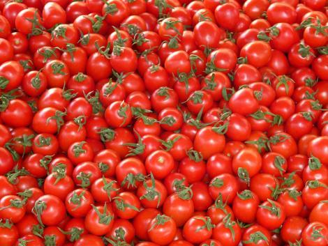 A spanyol termelők a paradicsomnál jövedelmezőbb hajtatott zöldségfélék termesztésére állnak át