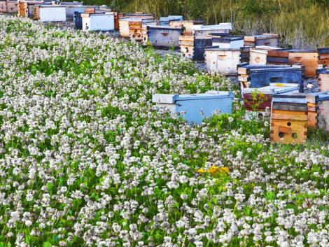 Nyári méhlegelőket alakítottak ki Bajorországban