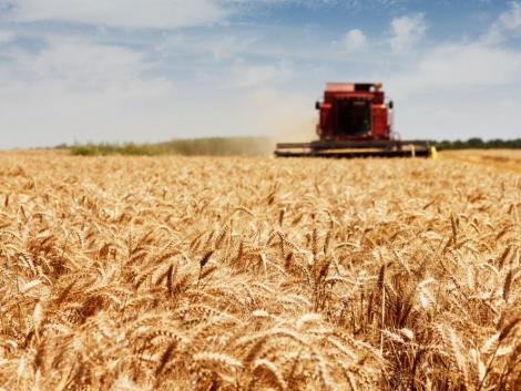 Egészen augusztusig elhúzódik a kalászosok aratása a keleti országrészben