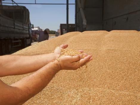 Az árak növekedése kárpótolhatja a gabonatermesztőket a gyenge hozamok miatt