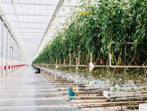 Elindult a kertészeti üzemek korszerűsítése pályázati felhívás társadalmi egyeztetése