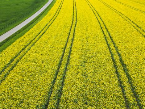 A jó repcetermés alapja az átgondolt tápanyagellátás – mire figyeljünk?