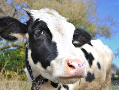 Szigorodnak az állatszállítás feltételei a hőség miatt