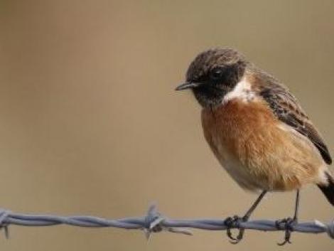 Szoros küzdelemben a cigánycsuk lett az év madara