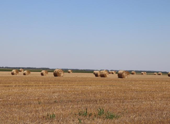 Az árak alakulása a termelőknek kedvez, viszont egyre több a növénybetegség