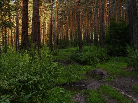 Új helyzetben az erdész szakemberek