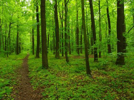Rövid időn belül a magán-erdőgazdálkodás szervezetrendszerének jelentős átrajzolódása várható