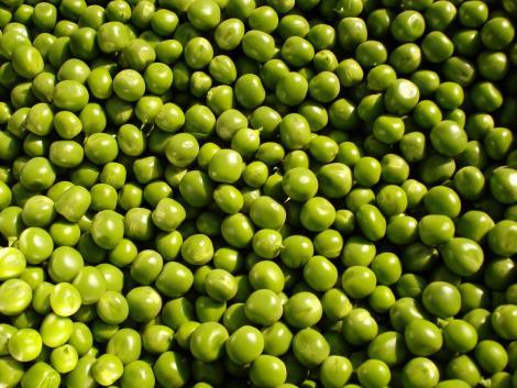 A Kecskeméti Konzerv Kft. a csemegekukorica és a zöldborsó feldolgozásában Európa egyik piacvezető gyártója