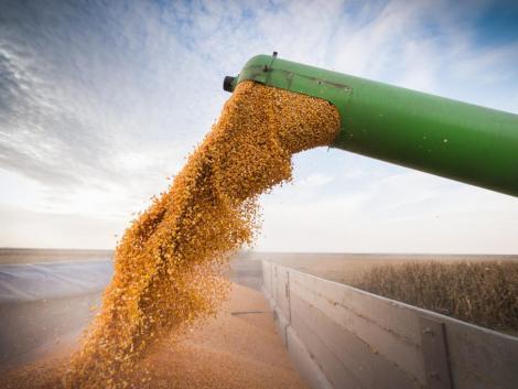 Soha nem látott mennyiségben vásárolt kukoricát Kína az Egyesült Államoktól