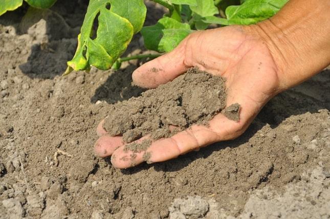 talaj minősége