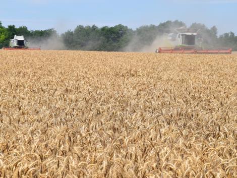 Hogyan értek el ezek a gazdák 9-10 tonnás kalászoshozamot 2020-ban?