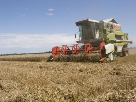 A tavaszi szárazság ellenére rekord búzatermést takaríthatnak be a lengyel gazdák