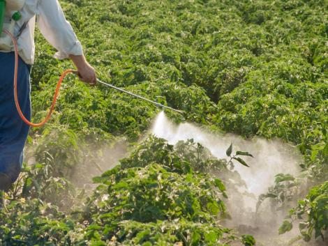 Valóban bekerülhet az élelmiszerekbe a klorát? Egyáltalán mit tudunk az ilyen növényvédő szerekről?