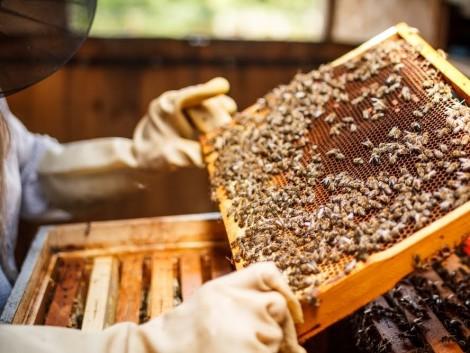 Jövedelempótló támogatást kapnak a méhészek