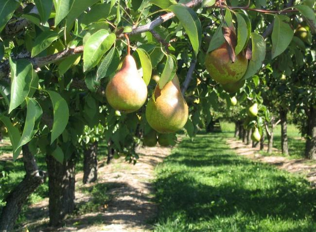 Mi várható a gyümölcs-, élelmiszer- és repceárak tekintetében?