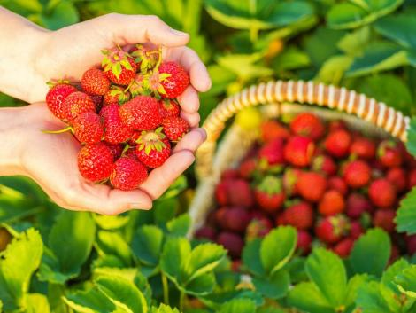 Változott az ökológiai gazdálkodásban felhasználható növényvédő szerek listája