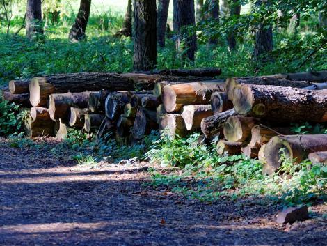 Jelentősen átalakul a magán erdőgazdálkodás