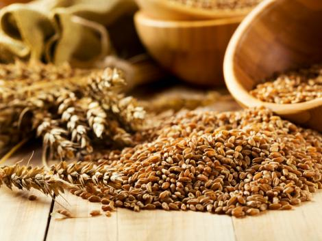 Örülhetnek a zalai gazdák: kiemelkedően magas a búza termésátlaga