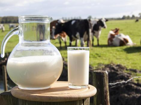 Hollandiában 2030-ra minden harmadik tejtermelő tönkremehet