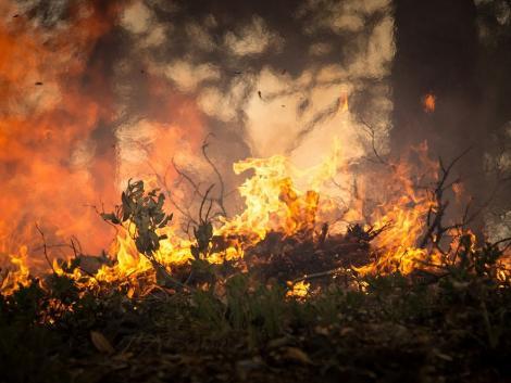 Egyre terjednek a bozóttüzek Kaliforniában és Coloradóban, életveszélyes helyzet alakult ki