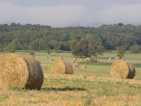 Bajban a német gazdák: kevés a szálastakarmány, ráadásul ami van, az is aranyáron