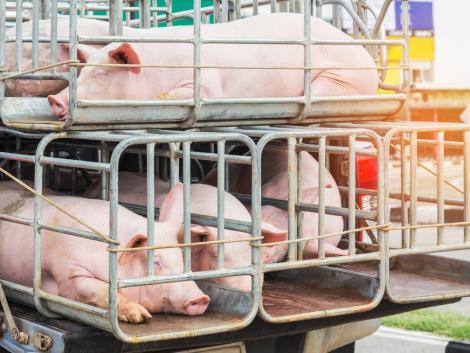 Napirenden az állatjóléti címkézési rendszer létrehozása és az állatszállítás kérdése