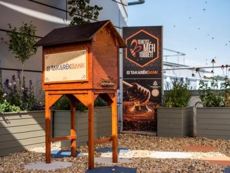 Méhcsalád költözött a Takarékbank székházának tetejére