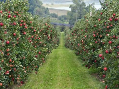 Indulhat a cefrézés a kiskerti gyümölcsösökben