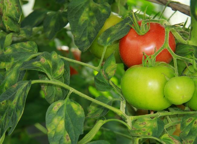 Ha gond van a zöldséggel, rávágjuk, mikroelemhiány! De ez egészen más!