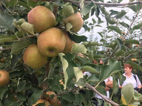 Összefogásban az erő! Komplex bemutató a jövedelmező almatermesztésért – VIDEÓ