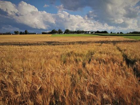 Közzétették az agrár-mintagazdaságok listáját