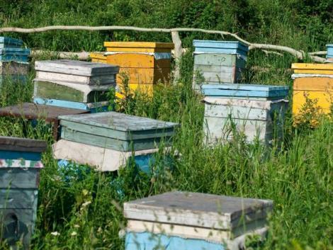 Nem lehetnek nyugodtak a méhészek: országszerte lopják a kaptárakat