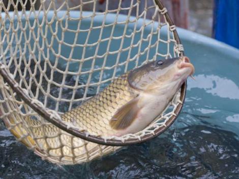 A magyar akvakultúra következő 10 évét meghatározó döntések most születnek