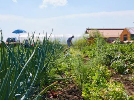 Nagyot léphet előre hazánkban a szociális mezőgazdaság