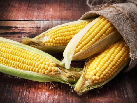 Elképesztő mennyiségű kukoricát dolgoz fel Magyarországon a Bonduelle