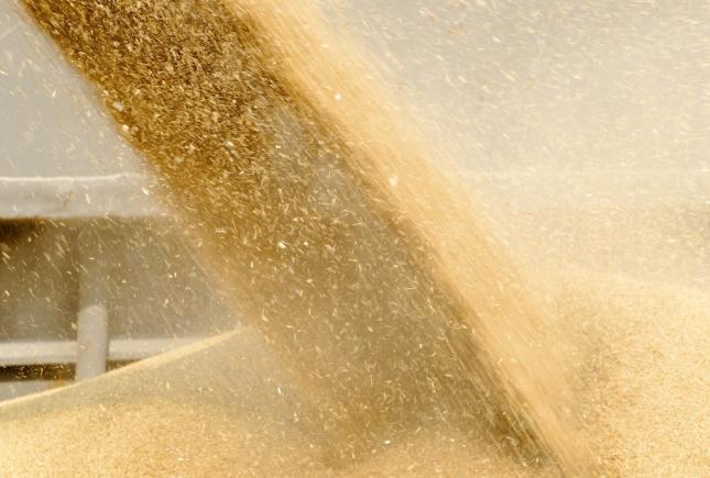 búza export takarmány