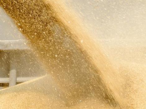 Felpörgött a gabonaexport 2020 első felében