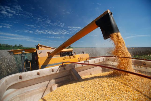 kukorica export takarmány