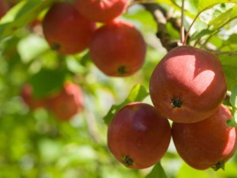 Katasztrofális év ez a gyümölcstermesztők és a fogyasztók számára egyaránt