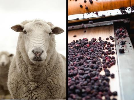 Hétmilliárd forint támogatást kaptak az élelmiszer-feldolgozó vállalkozások és a juhtartók