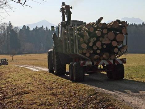 Milliós bírságot szabott ki a Nébih az ukrán fatermékek ellenőrzése során