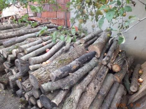 Több száz mázsa tüzifát lopott a kunhegyesi testvérpár