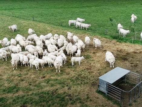 Együttműködésre hívja a húsmarhatartókat az NPK Beef – VIDEÓ
