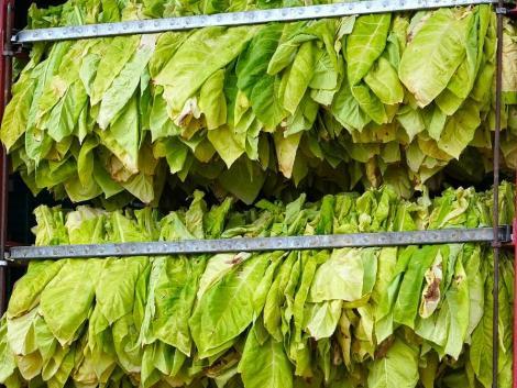 Illegális dohányfeldolgozó üzemre bukkantak a NAV ellenőrei