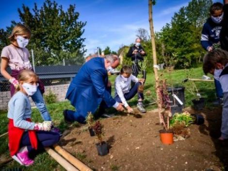 A klímaváltozás elleni harcban fontos szövetségeseink az erdők és a fák