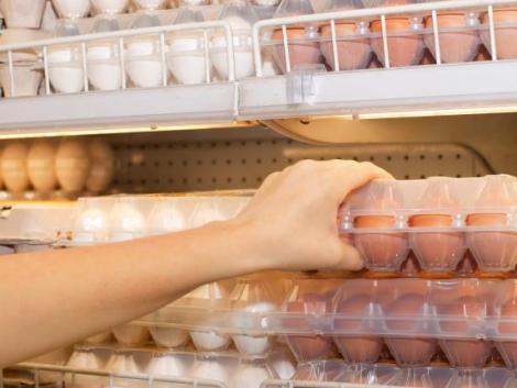 Szenzációs! Tojásból állítottak elő tejhelyettesítőt magyar kutatók