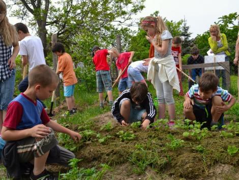Játék erdőtalajon: még a gyermekek immunrendszerét is erősítheti!