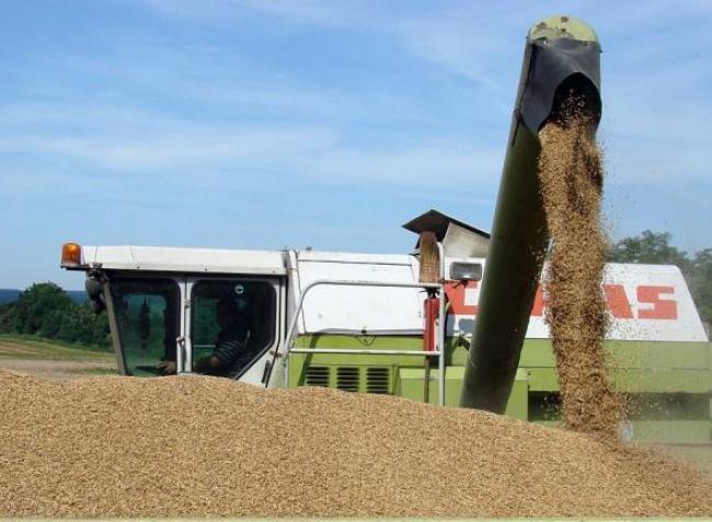 Emelkedik a búza ára! 14 százalékkal drágábban lehet eladni a terményt
