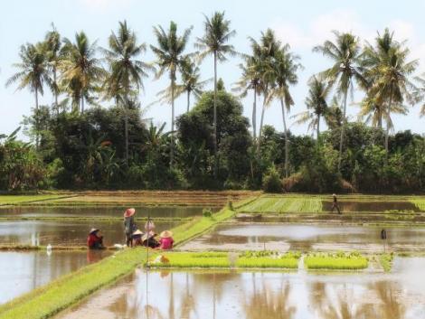 Ráktenyésztés a rizsföldeken – Kína csodafegyvere az éhínség ellen