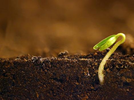 Itt az első foszfortartalmú talajkondicionáló!